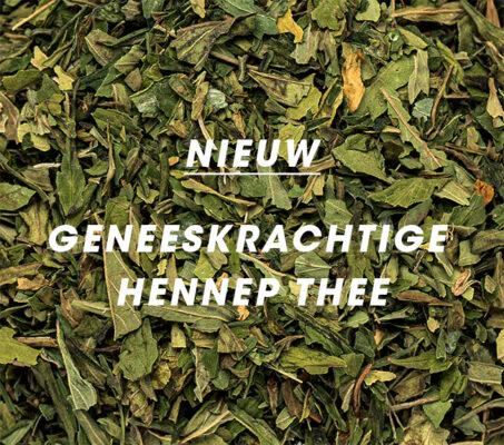blogpost-gepetto-hennep-thee